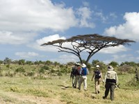 Trekking, Safari