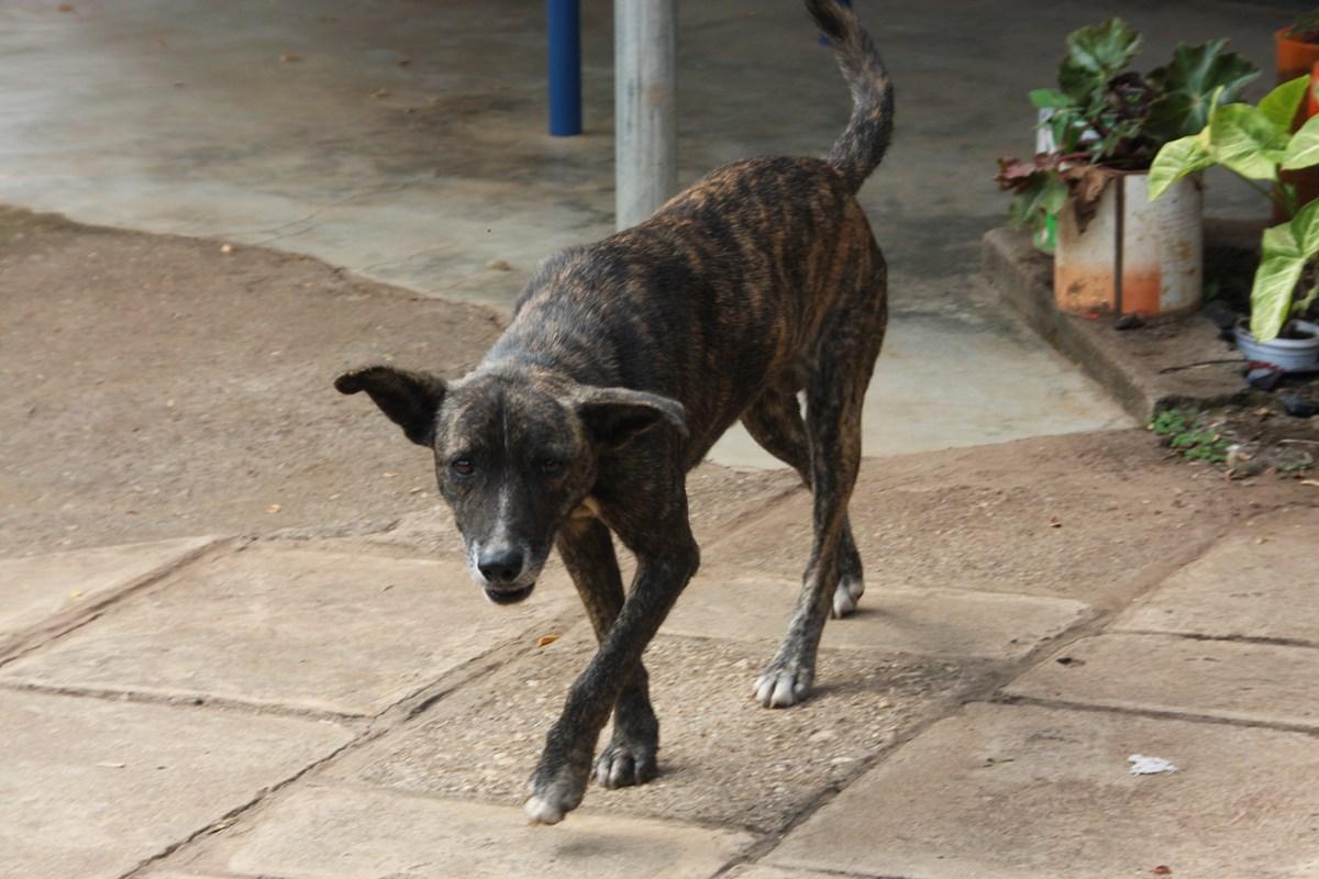 Indonesien Vorsicht Vor Freilaufenden Hunden News Fit For Travelde